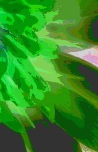 fenomenologia-vegetal.jpg